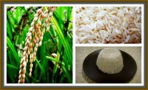 arroz11