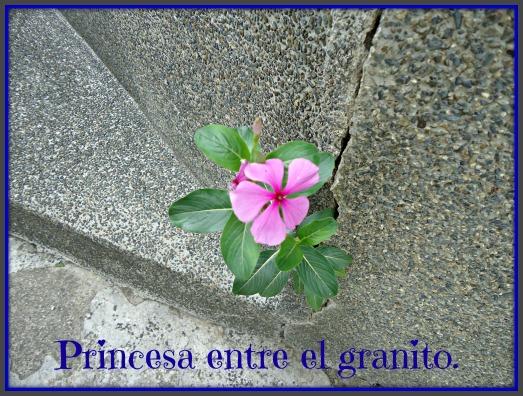 princesagrani