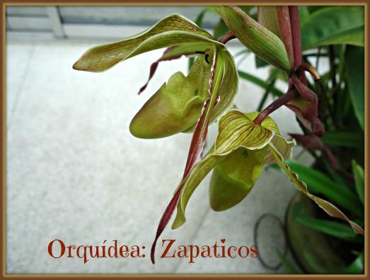 zapaticoas