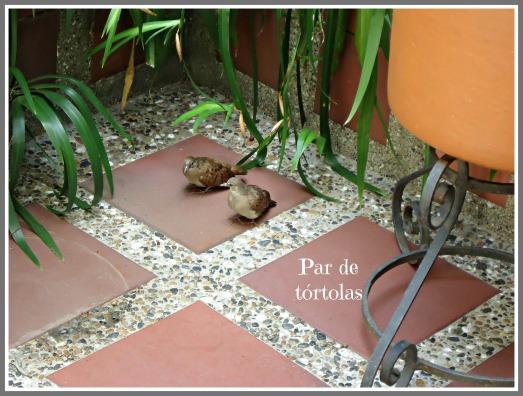 tortolas