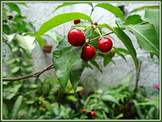 fruto1
