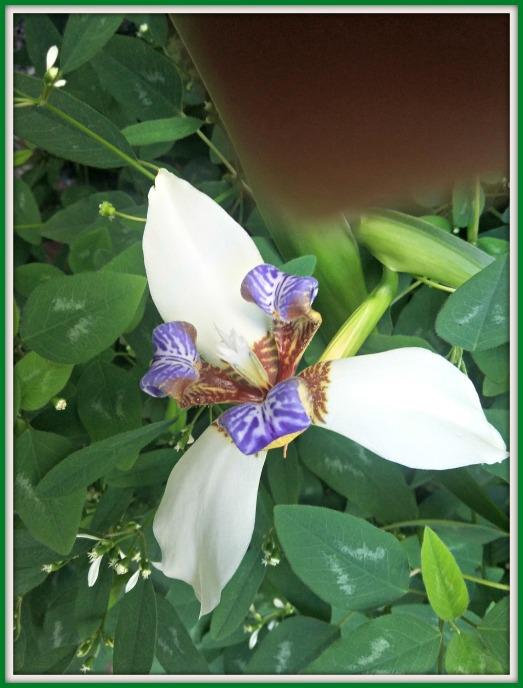 flor 23
